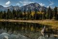 Картинка деревья, горы, озеро, отражение, Канада, Альберта, Alberta