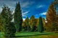 Картинка осень, трава, Attendorn, листья, Германия, деревья, обработка