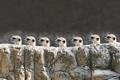 Картинка камень, сурикаты, профиль, головы