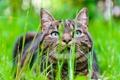 Картинка трава, кот, морда, размытость