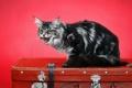 Картинка кошка, чемодан, страж
