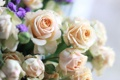 Картинка белые, розы, макро