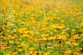 Картинка поле, макро, цветы, лепестки, стебель, луг