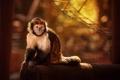 Картинка лапы, обезьяна, животные, взгляд