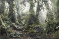 Картинка лес, звери, охрана, спасение, WWF