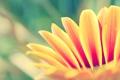 Картинка цветок, растение, лепесток