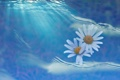 Картинка море, вода, лучи, свет, цветы, коллаж, лепестки