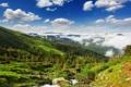 Картинка лес, облака, холмы, распадок