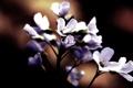 Картинка цветы, темный фон, лепестки, цветение, flower, beautiful