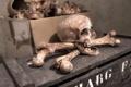 Картинка череп, кости, Pirate Treasure
