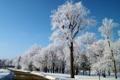 Картинка зима, дорога, небо, снег, деревья