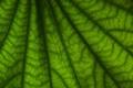 Картинка листья, макро, фон, обои, листок, фотографии, green macro