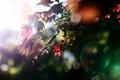 Картинка осень, листья, цвета, свет, природа, дерево, обои