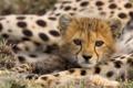 Картинка кошка, глаза, животное, ноги