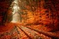 Картинка дорога, осень, лес, путь