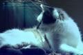 Картинка кошка, кот, вода, свет, лежит