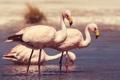 Картинка птицы, река, берег, фламинго