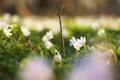 Картинка зелень, трава, макро, цветы, природа, поляна, растения