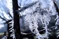 Картинка зима, снег, ветки, мороз, красиво, Иней