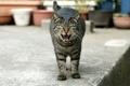 Картинка кот, зубы, улица
