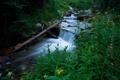 Картинка зелень, лес, трава, вода, природа, ручей, дерево