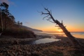 Картинка закат, море, дерево