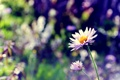 Картинка цветок, макро, цветы, лепестки, размытость, стебель, боке
