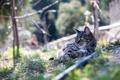 Картинка природа, кошка, лето