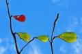 Картинка осень, небо, листья, природа, цвет, ветка