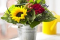 Картинка фото, Цветы, Подсолнухи, Гвоздики