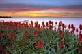 Картинка закат, цветы, море