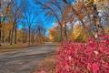 Картинка дорога, осень, листья, деревья, парк, багрянец