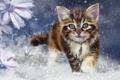 Картинка взгляд, снег, котенок, арт, живопись, ушки