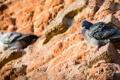 Картинка птицы, стена, голуби