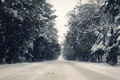 Картинка зима, елки, снег