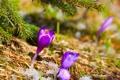 Картинка снег, ёлка, цветы