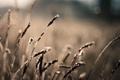 Картинка bokeh, фото, лето, поле, боке, размытость, колоски