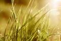Картинка лето, трава, свет, блики