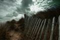 Картинка растения, небо, fortitude by glain07, забор, тучи