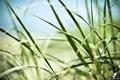 Картинка зелень, трава, цопирайт