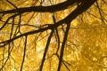 Картинка осень, листья, ветки, природа, дерево, листва, nature