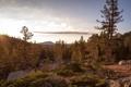 Картинка лес, горы, солнце, камни