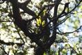 Картинка весна, ветки, Цветы, цветение, дерево, листок, листочки