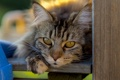 Картинка кошка, глаза, кот, взгляд, кошак