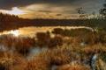 Картинка осень, трава, закат, болото, сухая