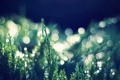 Картинка зелень, трава, макро, природа, фото, обои, растения