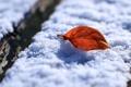 Картинка зима, листья, макро, снег, листок, утро, листки