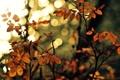 Картинка макро, дерево, обои, размытие, wallpaper, листочки, широкоформатные