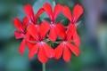 Картинка соцветие, лепестки, экзотика, цветы