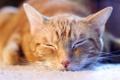 Картинка кошка, дом, сон